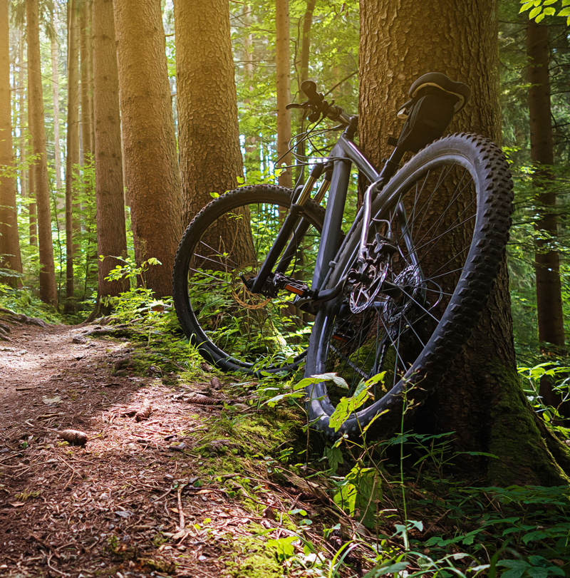 Bicycle rented from Morassi sport leaning against a tree in the woods